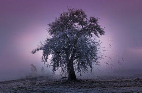 tree-2286510__340